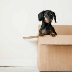 Que faut-il savoir lors d'un déménagement ?